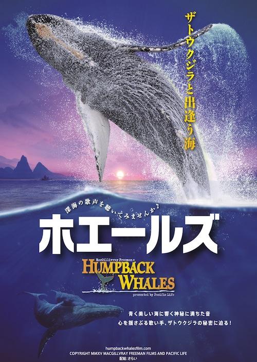 ホエールズ~ザトウクジラと出逢う海~