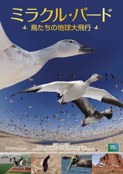 ミラクル・バード~鳥たちの地球大飛行~