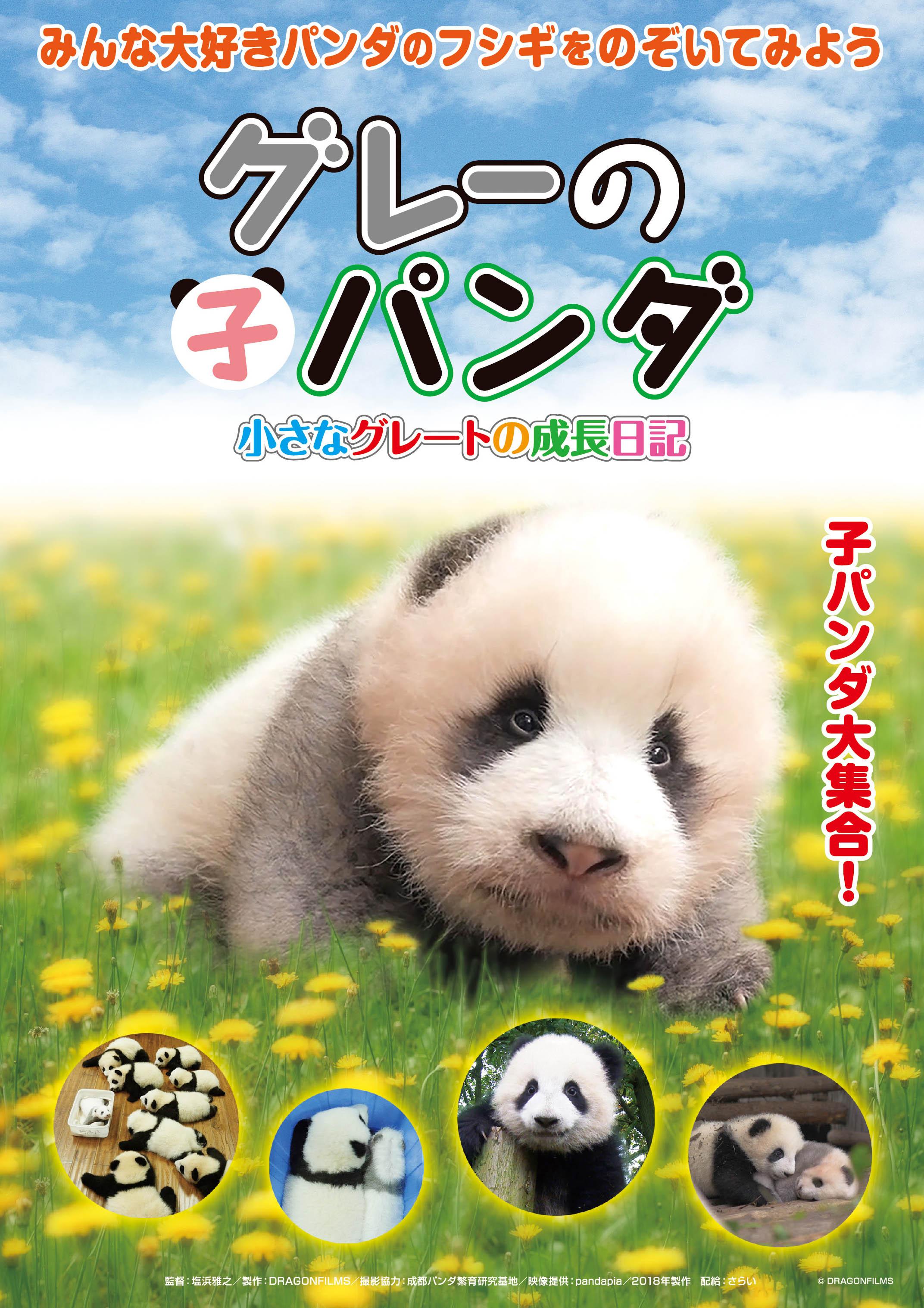 グレーの子パンダ~小さなグレートの成長日記~